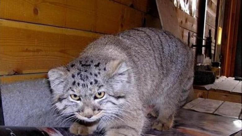 Кот загрызть котенка